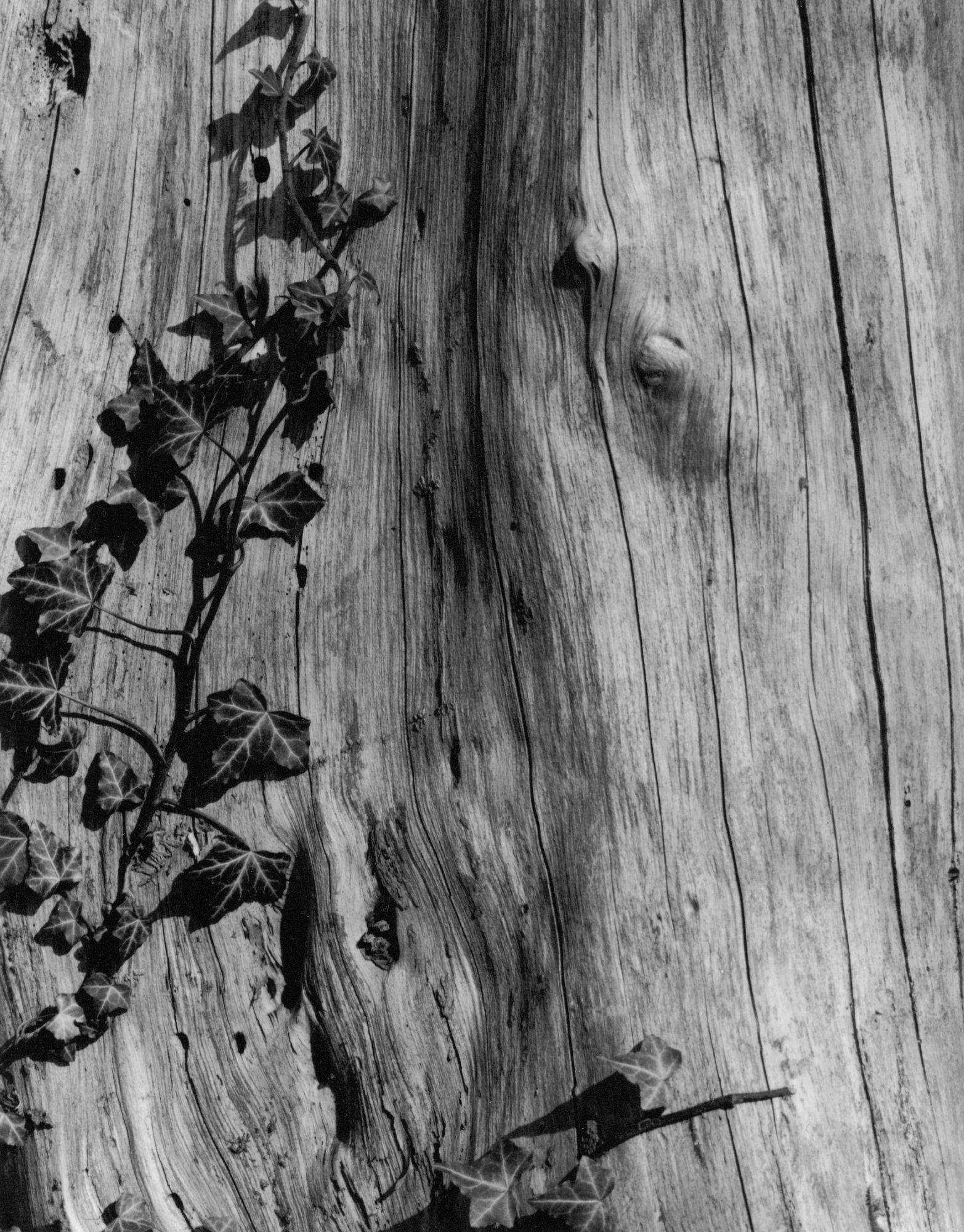 Wald - Danilo Bittorf Analog Photography